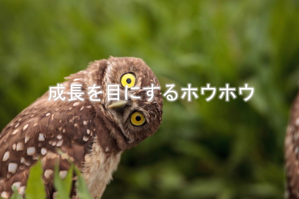 成長を目にするホウホウ